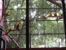 Perroquets colorés dans une volière au parc d'océan de Manille, Manille photos libres de droits