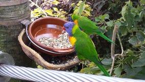 Perroquets colorés multi photographie stock