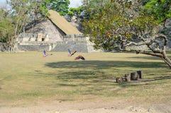 Perroquets d'ara à la grande plaza des ruines de Copan, Honduras photographie stock