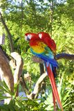 Perroquets d'ara, Mexique photographie stock