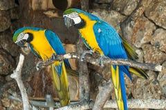 Perroquets d'arums Image libre de droits