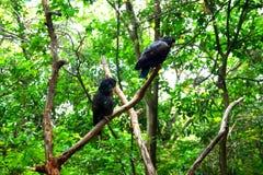 Perroquets d'or de noir d'aile en parc photographie stock