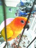 Perroquets d'oiseau photographie stock libre de droits