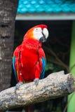 Perroquets d'un ara sur la branche dans le zoo image libre de droits