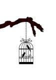 Perroquets dans la cage Photo stock