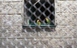 Perroquets dans le zoo photos libres de droits