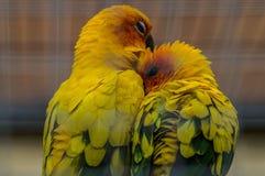 Perroquets dans un zoo russe image stock