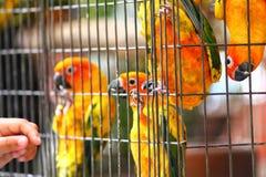 Perroquets dans une cage photos libres de droits