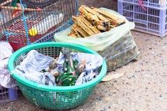 Perroquets de bébé sur le marché à vendre Photographie stock libre de droits