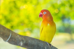 Perroquets de perruche se reposant sur une branche d'arbre image stock