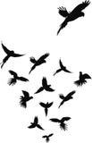 Perroquets de vol Images stock