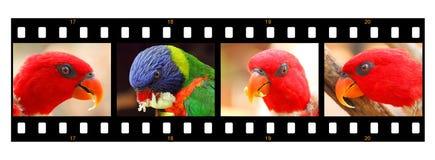 Perroquets Emblavage créatif de portrait Photos libres de droits
