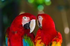 Perroquets en île Indonésie de Bali Photographie stock
