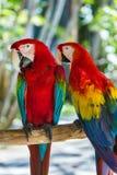 Perroquets en île Indonésie de Bali Photos stock