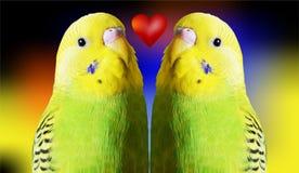 Perroquets et coeur rouge Photographie stock libre de droits