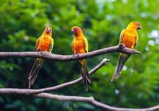 Perroquets exotiques photos libres de droits