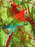Perroquets jumeaux étant perché sur des branches avec un fond vert coloré photographie stock libre de droits