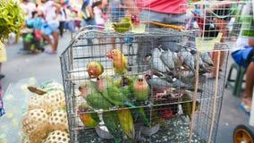 Perroquets multicolores dans une cage Vente des perroquets sur le marché philippin local image stock