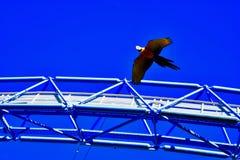 Perroquets ocolourful solitaires en vol image libre de droits
