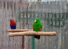 Perroquets : Parc de faune de Caversham photos libres de droits