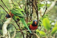 Perroquets se reposant sur un arbre photo stock
