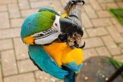 Perroquets sur la prise photos libres de droits