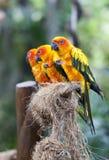 Perroquets sur un branchement Images stock