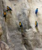 Perroquets sur un mur photo stock