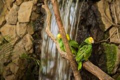 Perroquets verts d'ara sur la branche de zoo image libre de droits