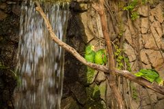 Perroquets verts d'ara sur la branche de zoo photos libres de droits
