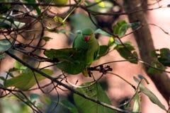 Perroquets verts se reposant sur des branches d'arbre images libres de droits
