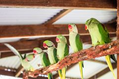 Perroquets verts sur l'arbre photo stock