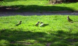 Perroquets verts sur la clairière verte photos libres de droits