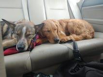 Perros imagen de archivo libre de regalías