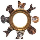 perros Fotos de archivo libres de regalías