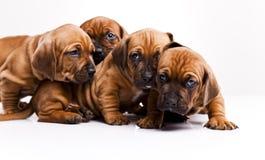 Perros Imagenes de archivo