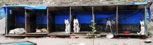 Perros Foto de archivo