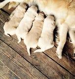 Perros Foto de archivo libre de regalías