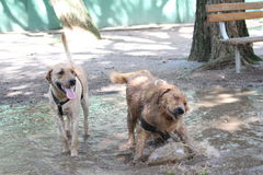 Perros Fotos de archivo