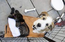 Perros abandonados tristes Fotografía de archivo