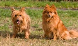 Perros adorables imagen de archivo