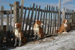 Perros atados a la cerca fotos de archivo