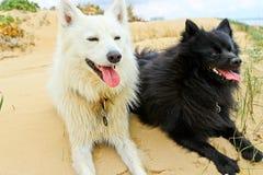 Perros blancos y negros Fotos de archivo libres de regalías