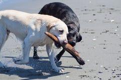 Perros con el palillo en la playa Imagen de archivo libre de regalías