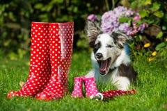 Perros con las botas de goma Imagenes de archivo