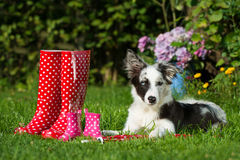 Perros con las botas de goma Imágenes de archivo libres de regalías