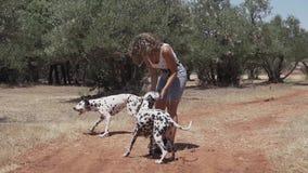 Perros dálmatas que juegan y que saltan en el bosque metrajes