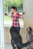 Perros de alimentación voluntarios del refugio para animales Fotos de archivo