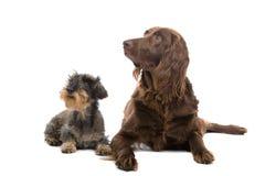 Perros de caza Imagenes de archivo