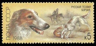 Perros de caza, galgo ruso imagen de archivo